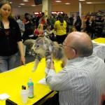 maine coon Hill's - MMME Nemzetközi Macskakiálltás
