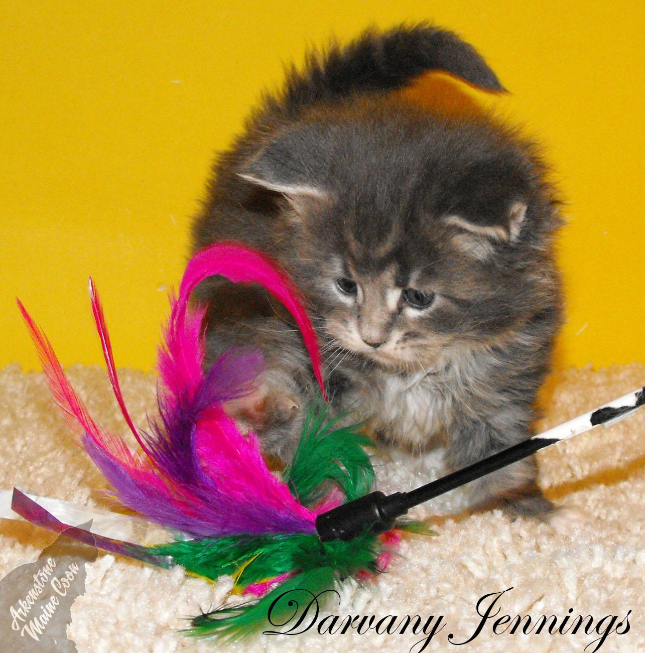 cat groomer petco